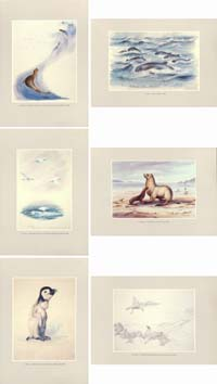 Facsimile Reproductions of Antarctic Watercolours - Set A: Natural History: Wilson, Edward
